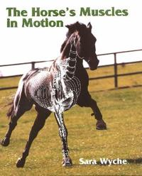 The Horses Muscles in Motion