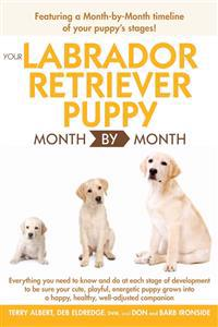 Your Labrador Retriever Puppy Month by Month