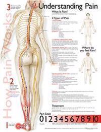 Bilde av Understanding Pain Anatomical Chart
