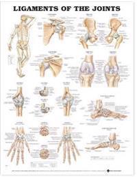 Bilde av Ligaments Of The Joints Chart